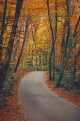 Autumn scene. Road in the middle of the forest.