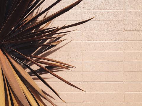 brown palm leaves against beige building