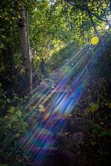 Hiking Sun Streaks