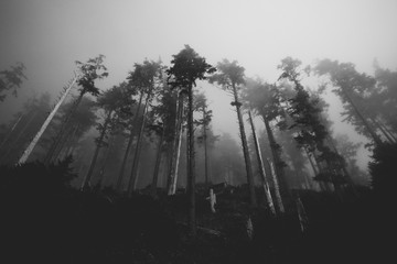 Black and White Silhouette of a Line of Trees in Fog