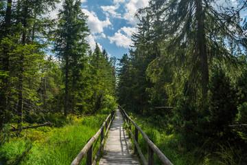 Sommer im Schwarzwald