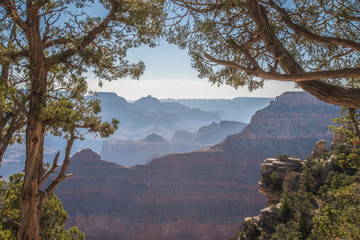 Trees Framing Layers of Grand Canyon