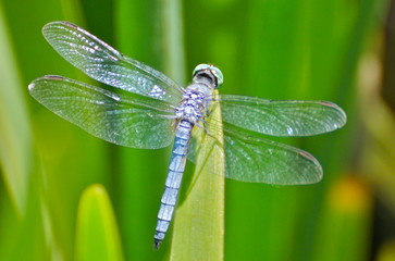 dragonfly, 5