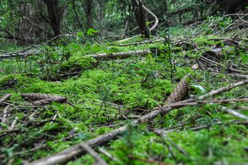mit Moos bedeckter Waldboden, Hintergrund