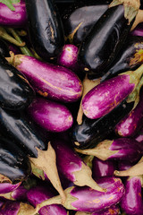 Colorful organic eggplants