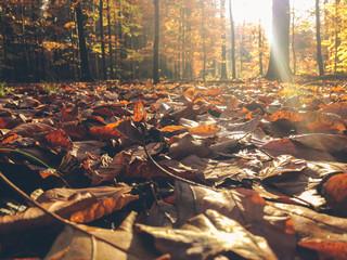 Sunshine in the Autumn Park