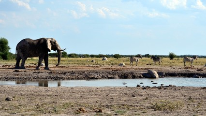 Water hole Elephant