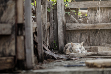 The cat is sleeping on old wood.
