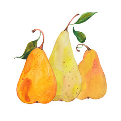 watercolor three pears