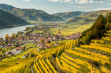 Weissenkirchen Wachau Austria in autumn colored leaves and vineyards Wall mural
