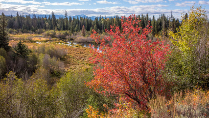 Autumn Colours in Wyoming