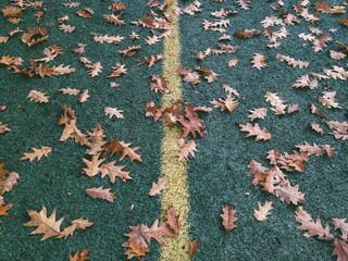 Autumn oak leaves on athletic sports field