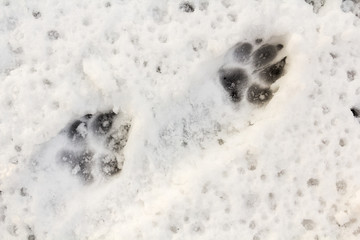 An animal track in the snow