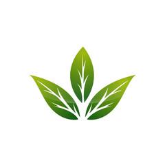 Logo Three Leaf Seperate