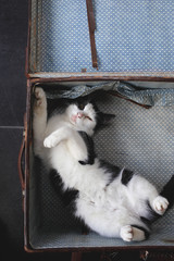 Playful cat in an old suitcase