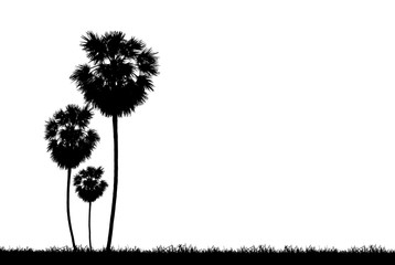silhouette palm tree on white background