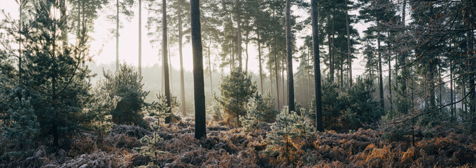Sunrise through frost covered woodland.