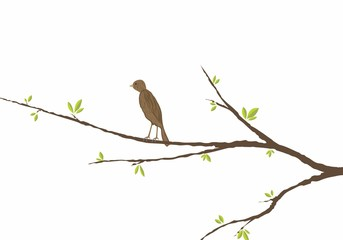 bird sitting on a branch with green leaves