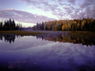 dawn paints autumn colored deciduous trees on far shore of a beaver pond in Michigan