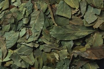 Full frame of bay leaf