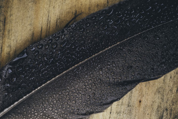 Feather with water drops,