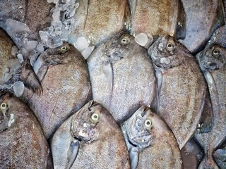 Fresh fish prepare for selling in market. Fish background.
