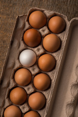 Concept: Be Unique - One White Egg in Carton of Brown Eggs