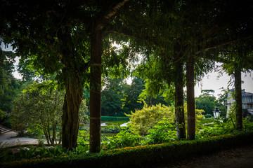 Paisaje portugués con bosques verdes