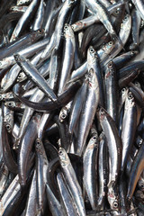 Fresh catch of anchovy in the fish market