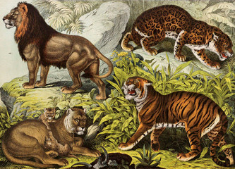 Predators: lion, tiger, jaguar,