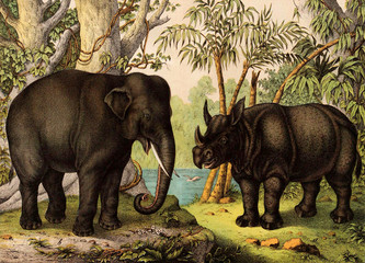 Elephant and Rhino in the jungle.