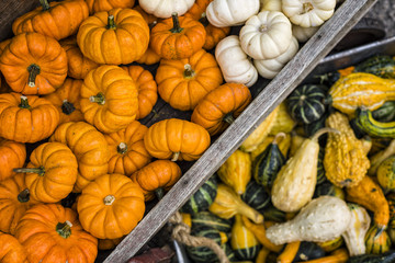 Calabazas / Pumpkin