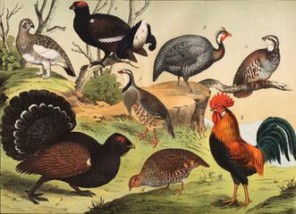 Different species of birds in the wild.
