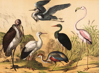Different species of birds in the wild.