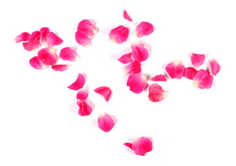 Pink rose petals isolated on white background, top view