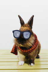Cute hipster  Bunny
