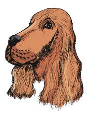 portrait of spaniel
