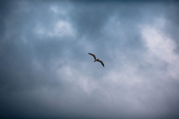 beautiful seagull on blue sky background with clouds