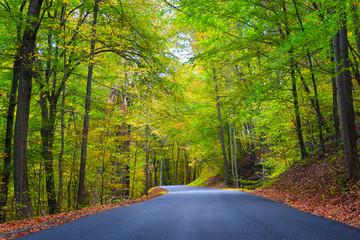 Road through Autumn Colors 2