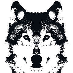 Illustration Vector Black Wolf
