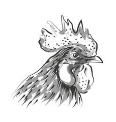 Vector line sketch rooster head