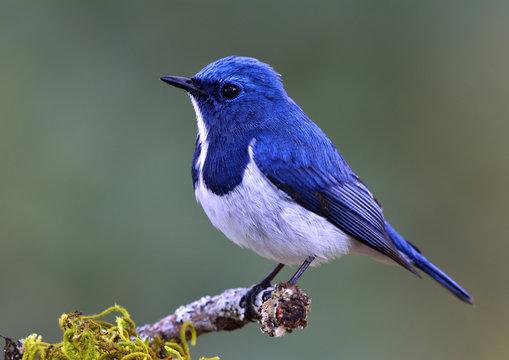 1,362,178 BEST Blue Bird IMAGES, STOCK PHOTOS & VECTORS | Adobe Stock