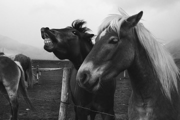 Two funny horses in the field