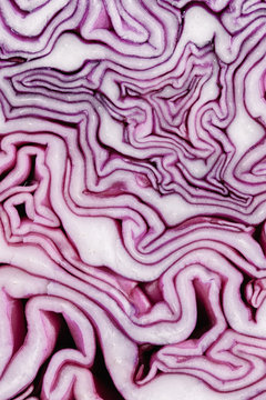 Red (purple) cabbage slice macro creating abstract pattern