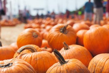 Fall pumpkin patch.