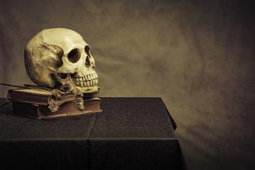 skull on the table , still life