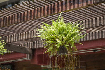 Fern in a pot hanging on a wooden rail.