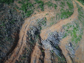 Deforestation. Aerial footage of logging in Thailand. Rainforest destroyed for palm oil plantations