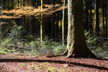 black forest gemany autumn