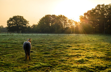 Ein einsames Pferd an einem Herbstmorgen